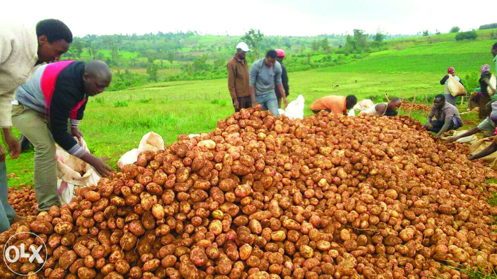 OLX digs in for business in potato fields - Nairobi Business