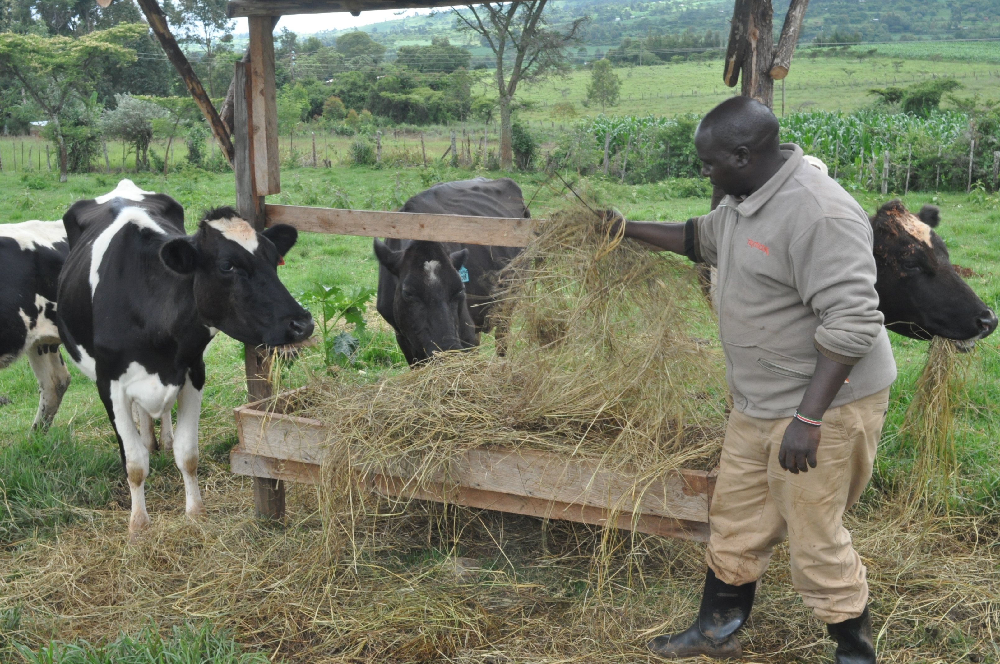 How dairy hubs are transforming lives of farmers