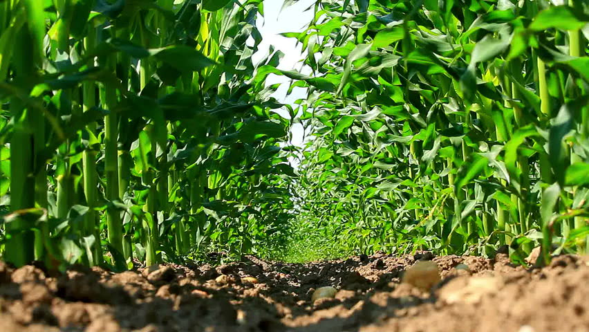 Agribusiness: the new green gold