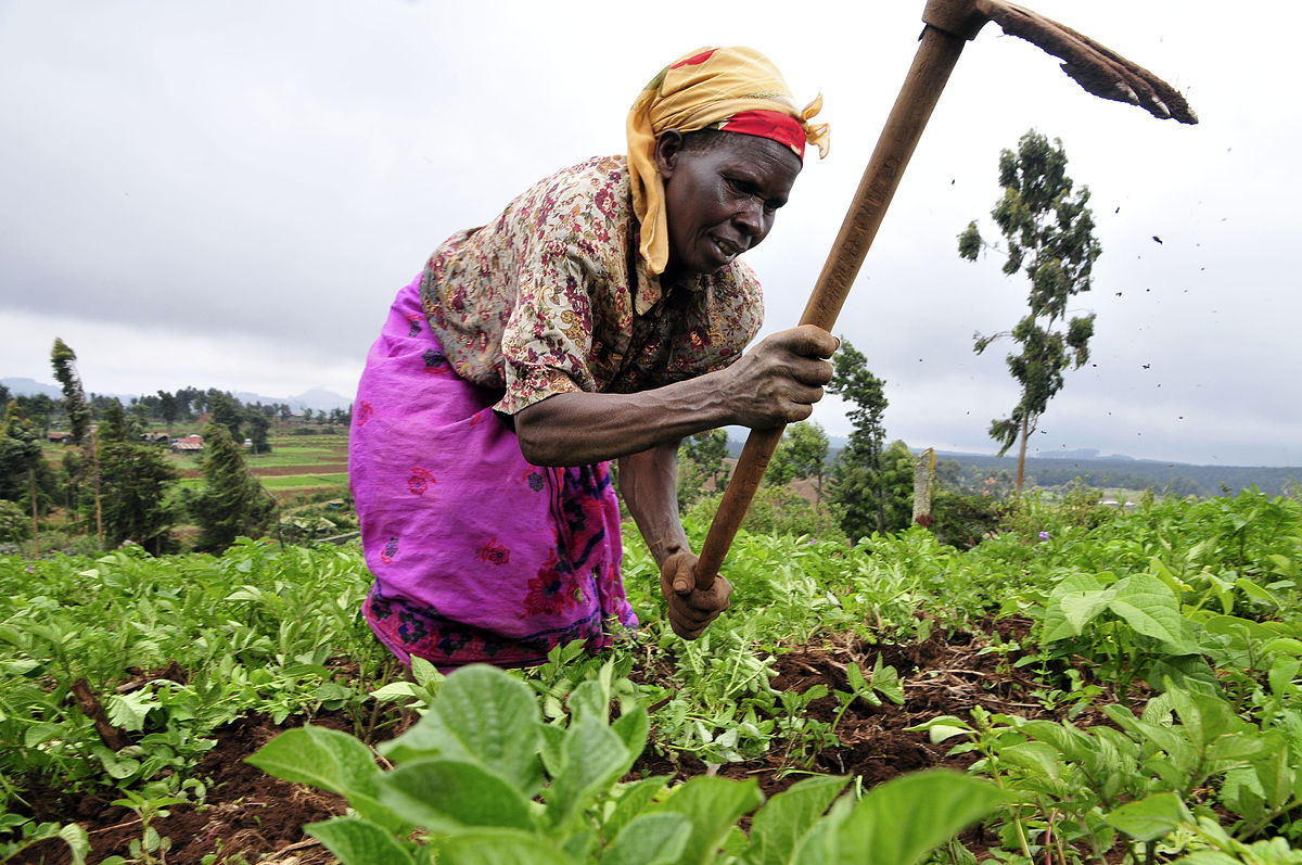 Africa bets on agriculture