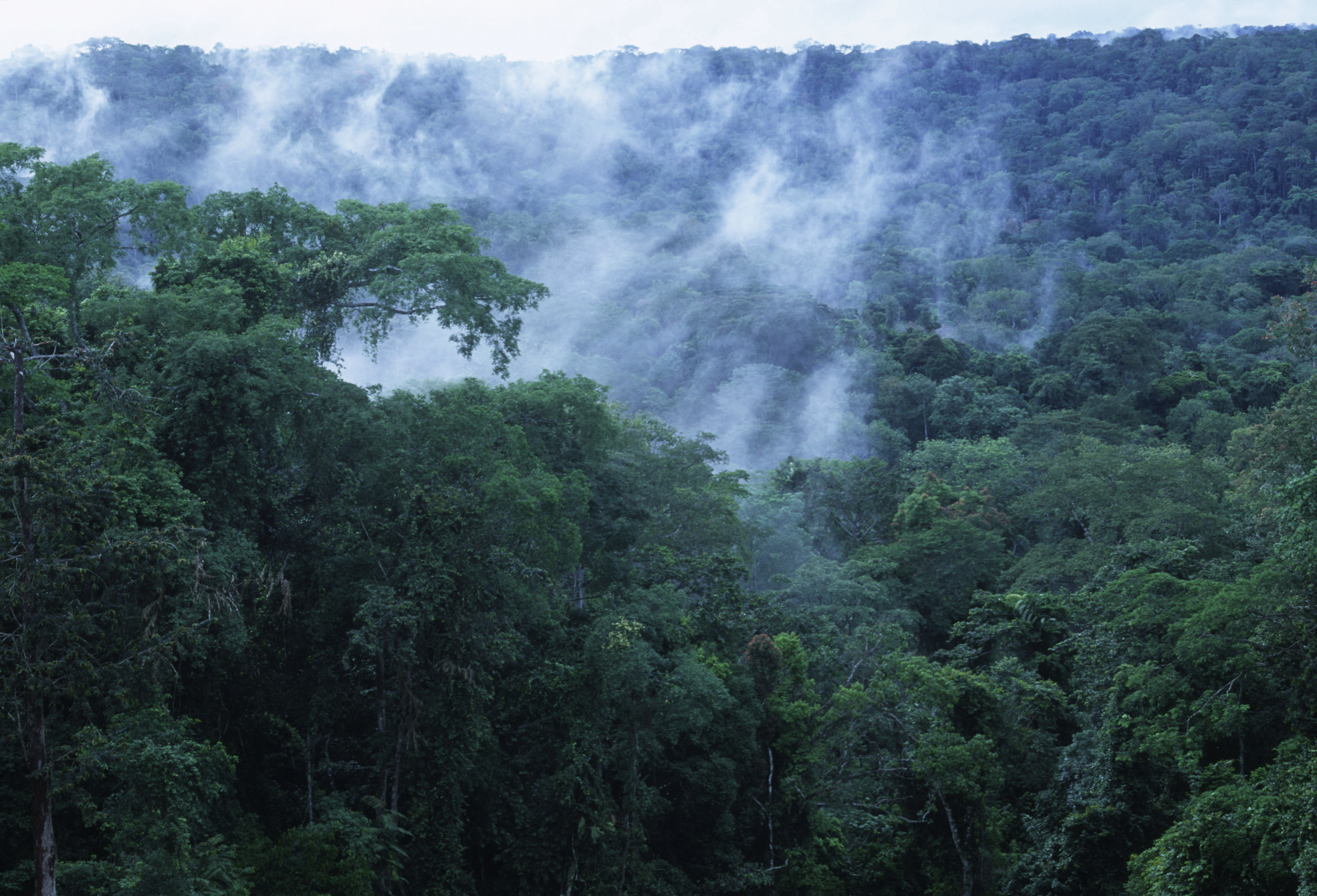 The Esperanza joins campaign to save Congo Basin forest