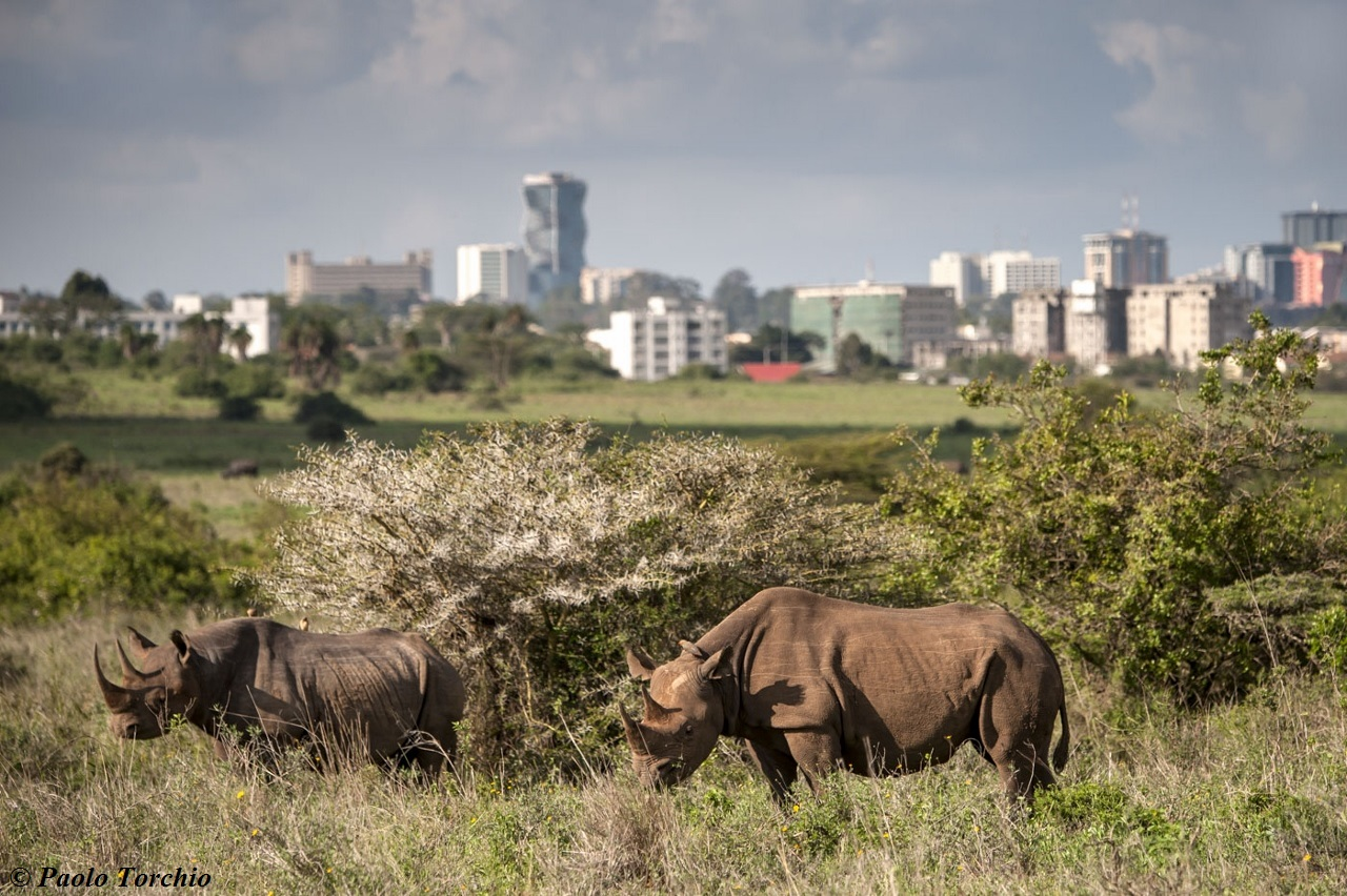Nairobi ranked Africa's top tourist destination on the rise